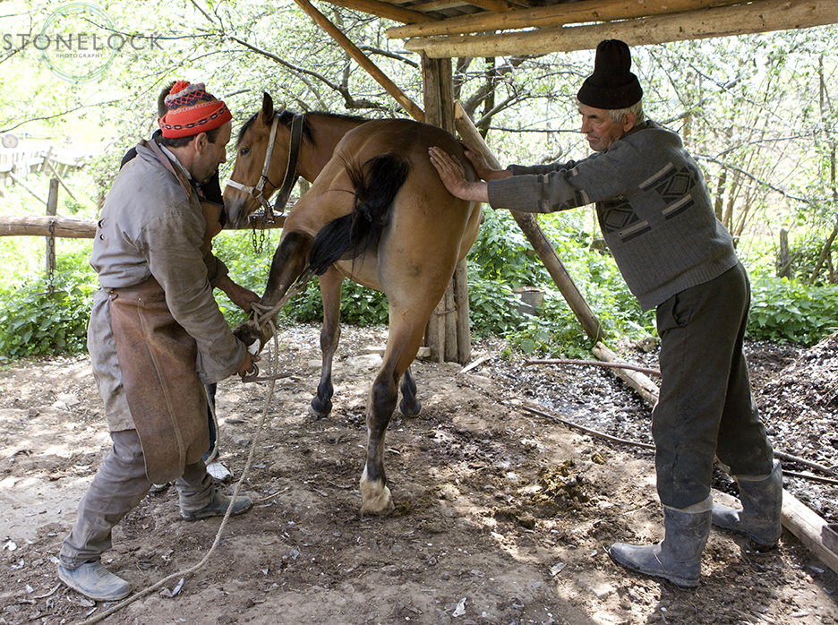 Ion Cicioc (the owner) and Ioan Bizau (the blacksmith) attempt to re-shoe a tempremental horse in Bogdan Voda, Maramures, Romania,