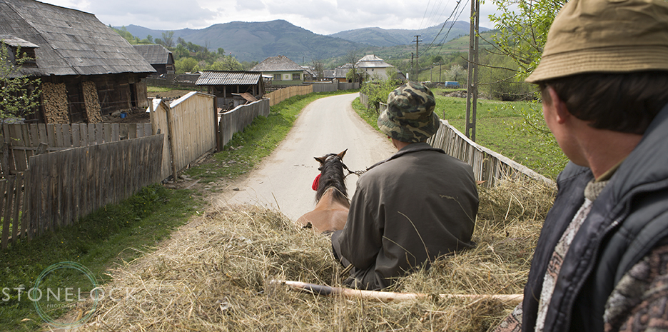 Maramures men transporting hay by horse and cart, Botiza Village, Maramures, Romania,